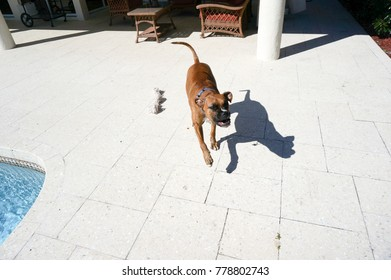 dog jumps to catch