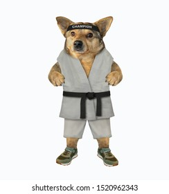 """The dog karate fighter in a kimono and a black headband with the lettering """" champion """" is making exercise. White background. Isolated."""