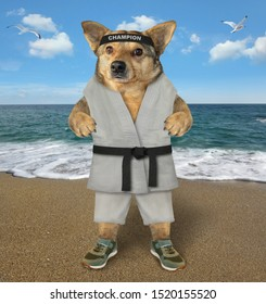 The dog karate fighter in a kimono is making exercise on the beach of the sea.
