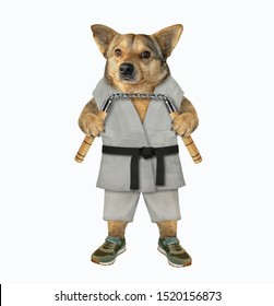 The dog karate fighter in a kimono is making exercise with nunchuck. White background. Isolated.