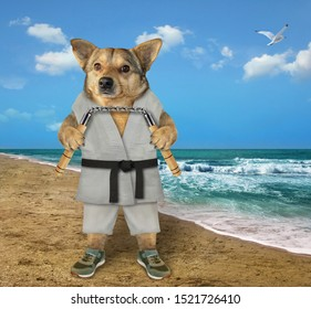 The dog karate fighter in a kimono is making exercise with nunchuck on the beach of the sea.
