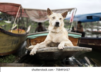 The dog keep an eye on the boat
