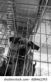 The dog was kept in an iron cage and was waiting to be adopted