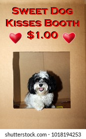 Dog in a Kissing Booth