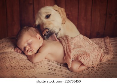 A dog is kissing a sleeping baby