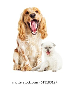 Dog and  kitten mews on a white background
