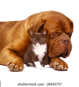 Dog and kitten on a white background.