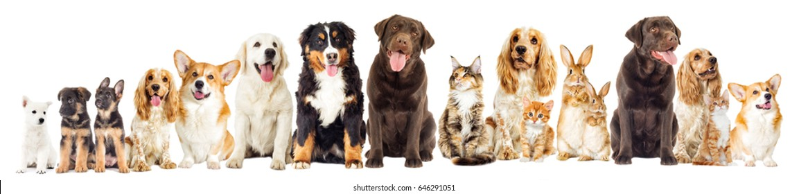 dog and kitten on a white background