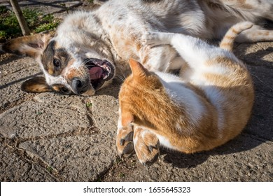 dog and kitten playing outside in the yard. dog and kitten friendship. puppy and kitten in a fun game.