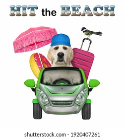 A dog labrador drives a green car to the sea. Hit the beach. White background. Isolated.