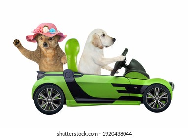 A dog labrador drives a green car with a passenger. White background. Isolated.