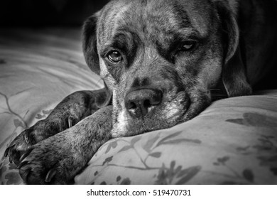 Dog laid on bed