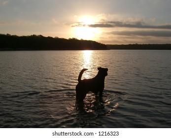 Dog in lake during sunset