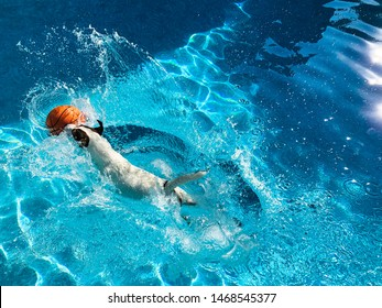 Dog landing in water with a splash after having jumped into swimming pool to get basketball.