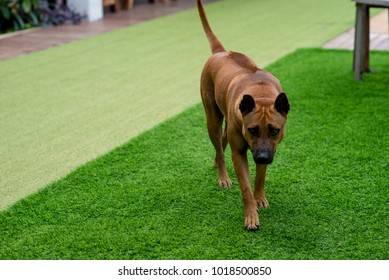 Dog  Dog in the lawn