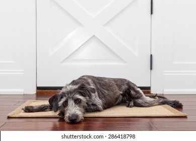 A dog laying down on a mat in front of a front door with a sad expression waiting for her owner to come home