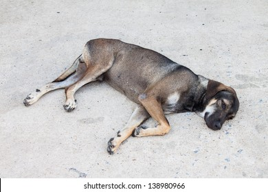 The dog laying down on street