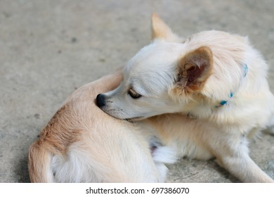 A dog laying down and playing outdoor / wallpaper/  animal background