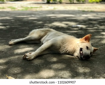A dog is laying on the ground under a tree shade on a sunny day