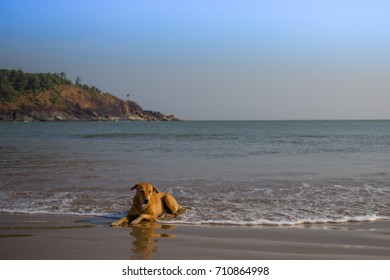 A dog laying in the shore with the ocean behind in a tropical climate.