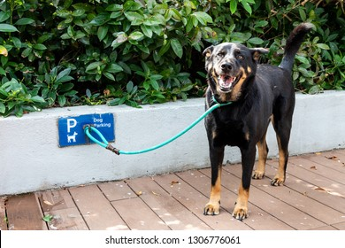 Dog leashed at designated dog parking area of shopping mall in Hong Kong