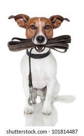 Dog Begging Images Stock Photos Amp Vectors Shutterstock