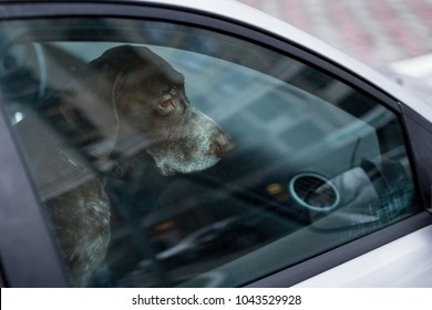 Dog left alone in locked car. Abandoned animal in closed space. Danger of pet overheating or hypothermia. Owner's negligence and health threat
