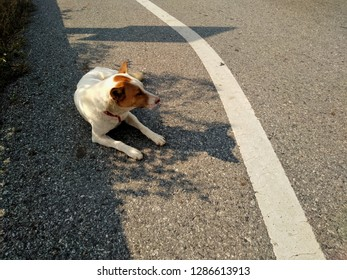 The dog was left on the road like it was waiting for the owner.