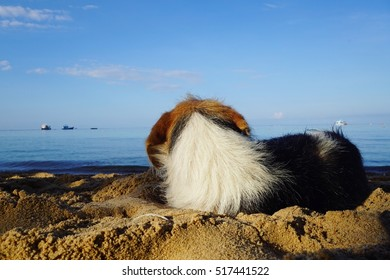 dog lie curled up on the beach in morning sun light with ocean seaview