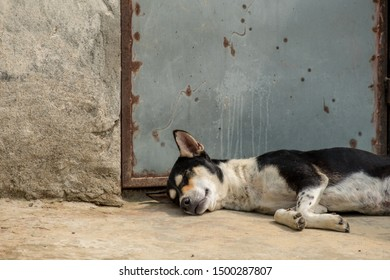 A dog lies asleep on the concrete threshold of a house with a metal door.