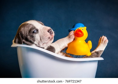 the dog lies in the bath