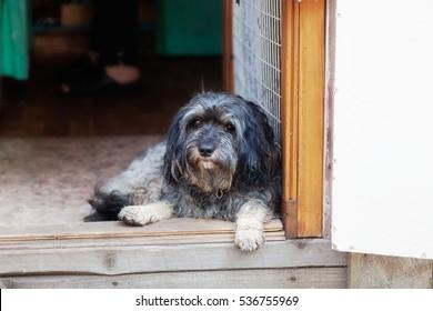 A dog lies in the doorway