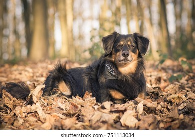 Dog lies in the foliage and looks into the camera