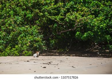 dog lies on the beach, dog on the sand