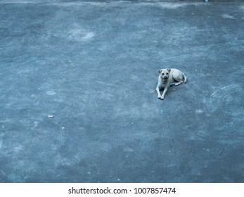 The dog lies on the square
