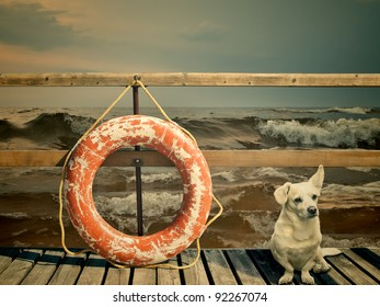 dog and lifebuoy on the pier over stormy ocean