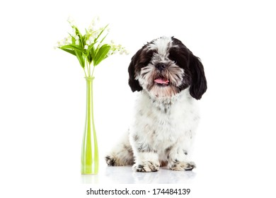 dog with lily of the valley isolated on white background. spring