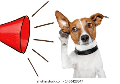 dog listening with big ear to a red big megaphone, isolated on white background
