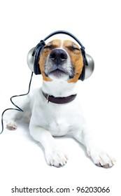 dog listening to music