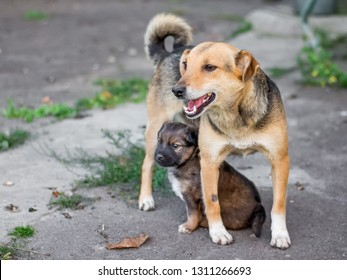 Dog with a little puppy. A little puppy under the protection of mother
