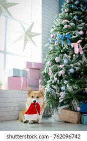 A dog in a living room sitting next to a Christmas tree holiding Santa Claus's hat in his mouth looking happy