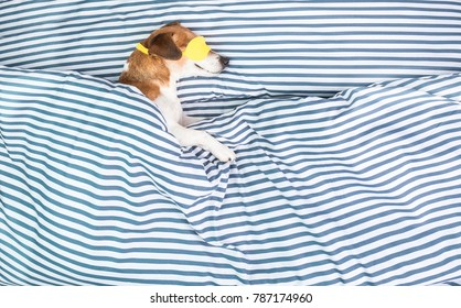 Dog lonely sleeping in striped pattern bed. Healthy sweat napping