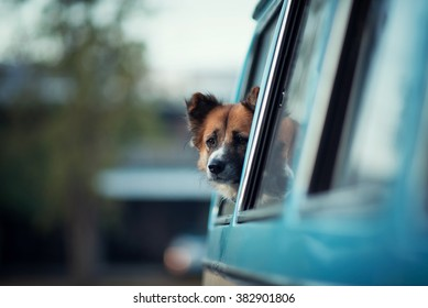 a dog is lonely at the window, vintage tone