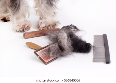 Dog with long hair standing beside grooming and trimming equipment. White background
