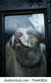Dog longingly looking out window with rain drops