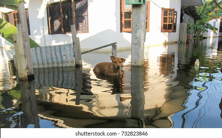 Dog look at owner in flooding area