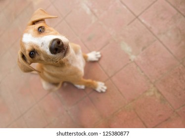 Dog looking up