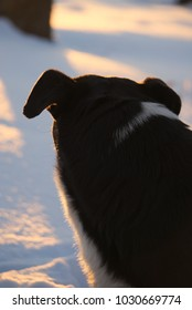 A dog looking back.