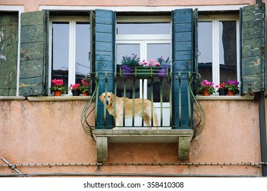 Dog looking from balcony while waiting for his owners to come back. Everyday Venice.