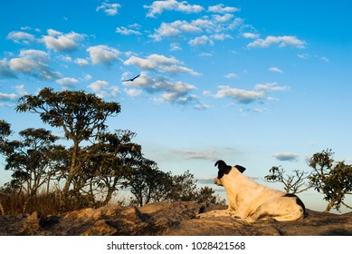 Dog looking at bird in the sky in Brazil